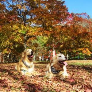 福原山荘🍂へ紅葉狩り遠征~🎵