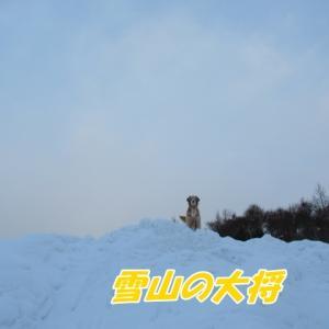雪山の大将