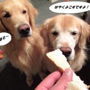 奇跡のパンを食すヴェルヴィオ