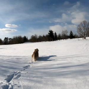 足跡一つないまっさらな雪原✨🤩