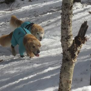 ヴェルは・・・登山カメラマン!?
