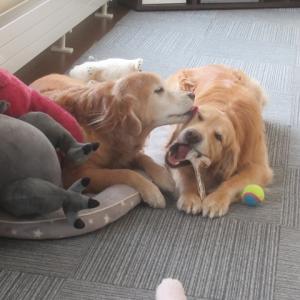 ヴェルヴィオに新しいお友達が出来たよ🤩(楽しい動画もあるよ🎦)