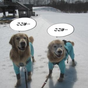 冬の最後のお楽しみ~🤩 スキー場で遊んできたよ♪