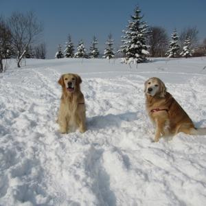 久しぶりの新雪♪