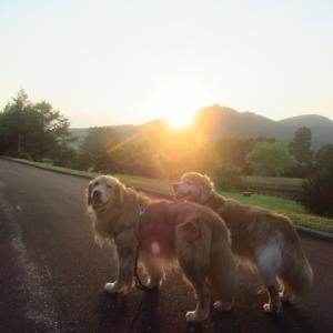 夕焼け浴びて夕方散歩♪