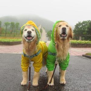 涼しい~~ カッパ着て雨のルンルンお散歩♪