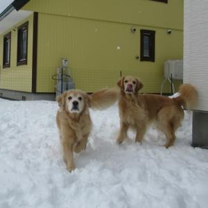 雪があるとやっぱりうれしいヴェルヴィオ♪