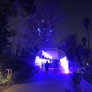 江ノ島のイルミネーションが始まる少し前の夜のあかりを見ながら歩く。