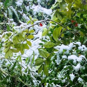 『雪見』と『さくら見』と。