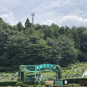 町田ダリア園|町田薬師池公園 四季彩の杜