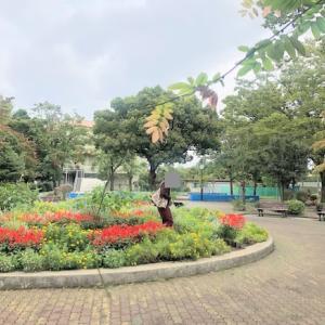 公園散歩|鶴川中央公園(町田市)