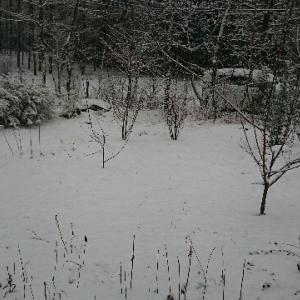 お山の雪景色を見たいのに・・