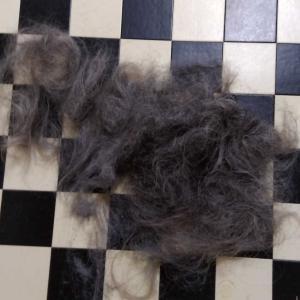 コロナウイルス騒動の中、30ヶ月後の髪の毛の行方は・・
