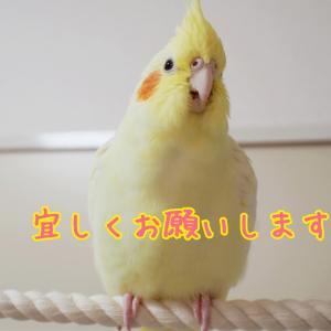 ブログ1000記事目!!