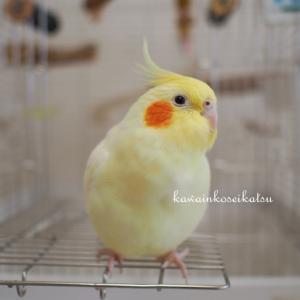 鳥を診れる獣医師