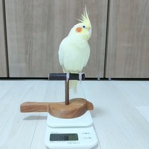 ピィキィちゃんの体重測定&キャリー