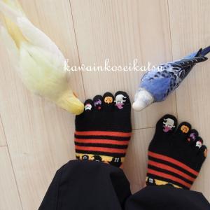 ハロウィンの靴下ラブ♡