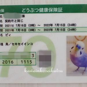 動物保険3年目