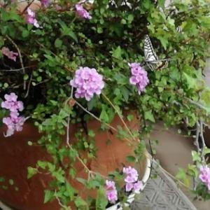 植物の癒しパワーが和む~♪ガーデニングは疲れ気味のアラフィフにおすすめです!