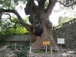 與止日女神社(佐賀県佐賀市大和町)