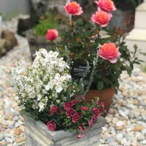 5月4日のキレイに咲いたるお花たち(๑>◡<๑)