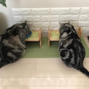 人も猫も肥ゆる秋がやってきた♫