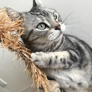 猫と花粉症