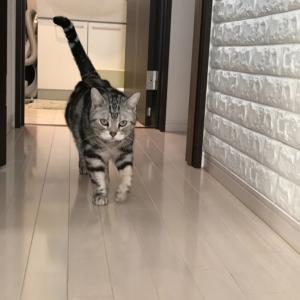 猫マスターになる!