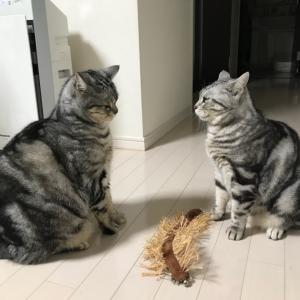 猫流ファイティングポーズ♫