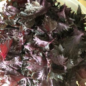 赤紫蘇のシロップ作りました❤️