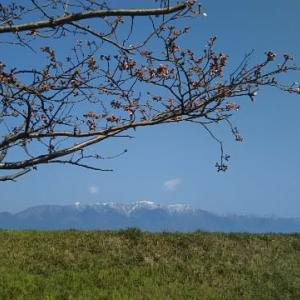 琵琶湖の春はまだです