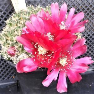 今日目についた花や蕾