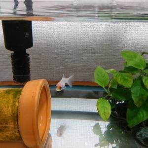 ひとりぼっちの水槽