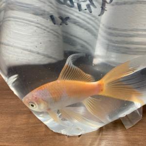 そして鉄魚