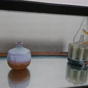 混泳失敗~金魚と鉄魚
