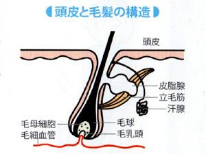 ミノキシジルの塗り方の工夫|塗り広げる