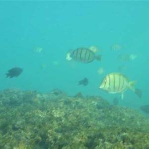 暑いハワイの冬~海の魚