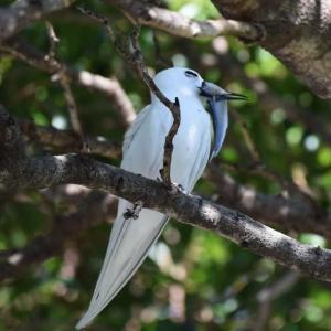 子を待つ親 - ホノルル野鳥観察