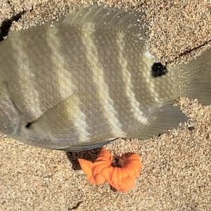 何となく釣り in Waikiki