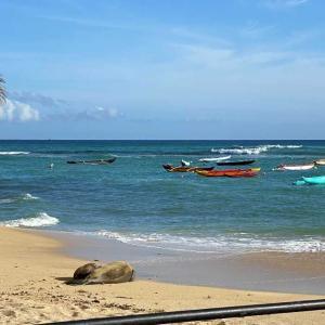 ハワイアザラシの親子‐ワイキキ・カイマナビーチ