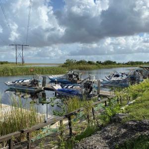 フロリダ湿地帯の野鳥観察