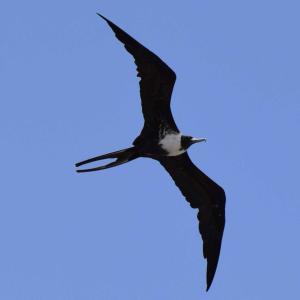 フロリダの空を飛ぶ鳥