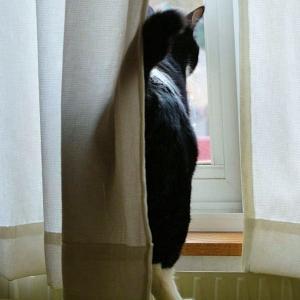 窓の外は広い世界だけどちょっと怖いよね