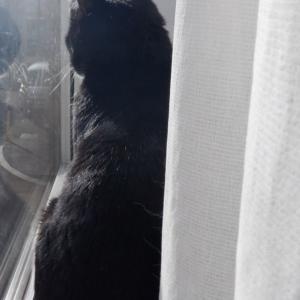 一日は、窓に始まる。