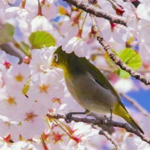 慎ましく、近所の春です♪