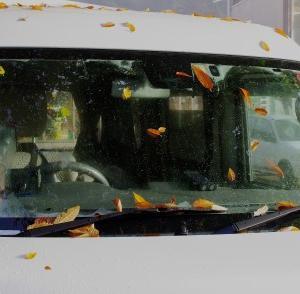 朝一番の紅葉が…(笑)&本日もユキちゃんは麗しく