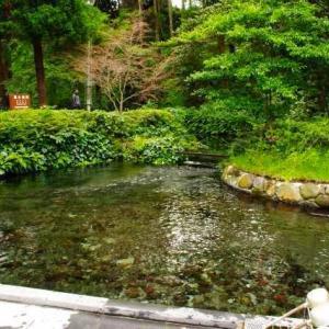 九州旅行9日目① 白川水源