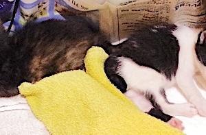 乳幼子猫2匹、複雑な気持ちだけど致し方なし。