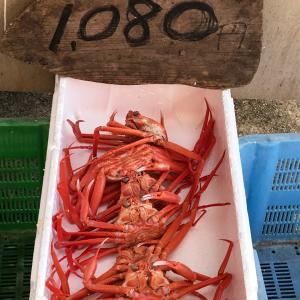 【激安☆蟹のお値段に衝撃!鳥取PR】珍しい白磁が入荷してきています