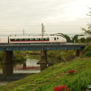彼岸花と特急電車